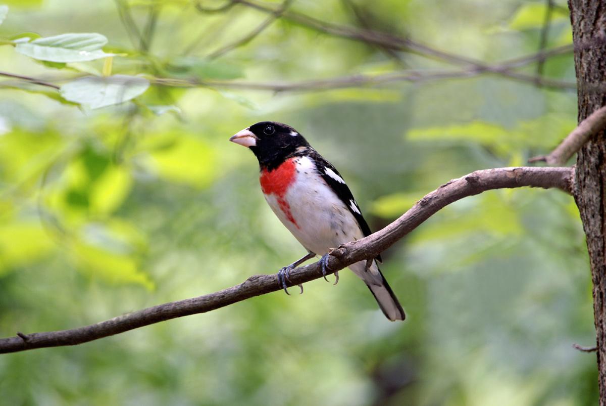birdtree-6044932s