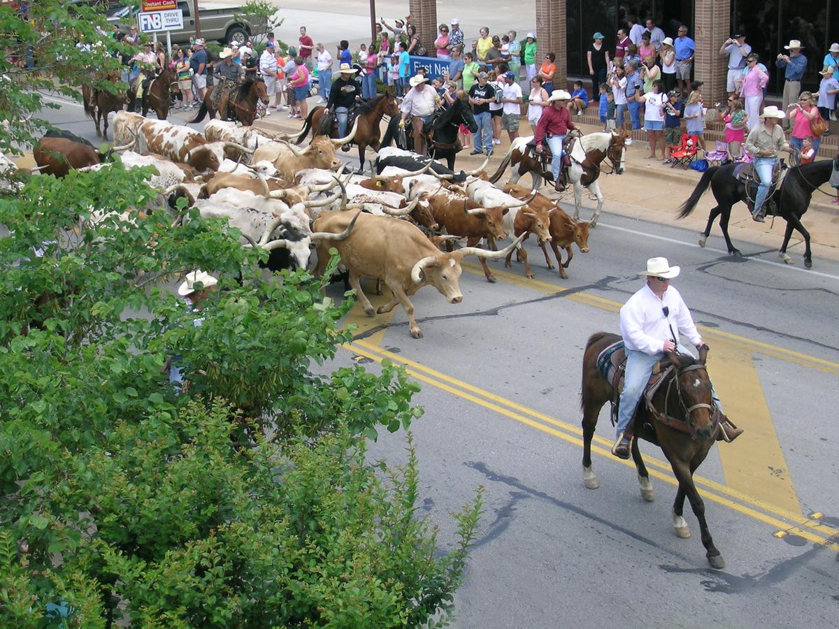 Cattle-BHeritageGathering-JO7229m